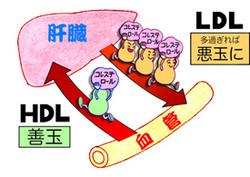 Ldlandhdl_2