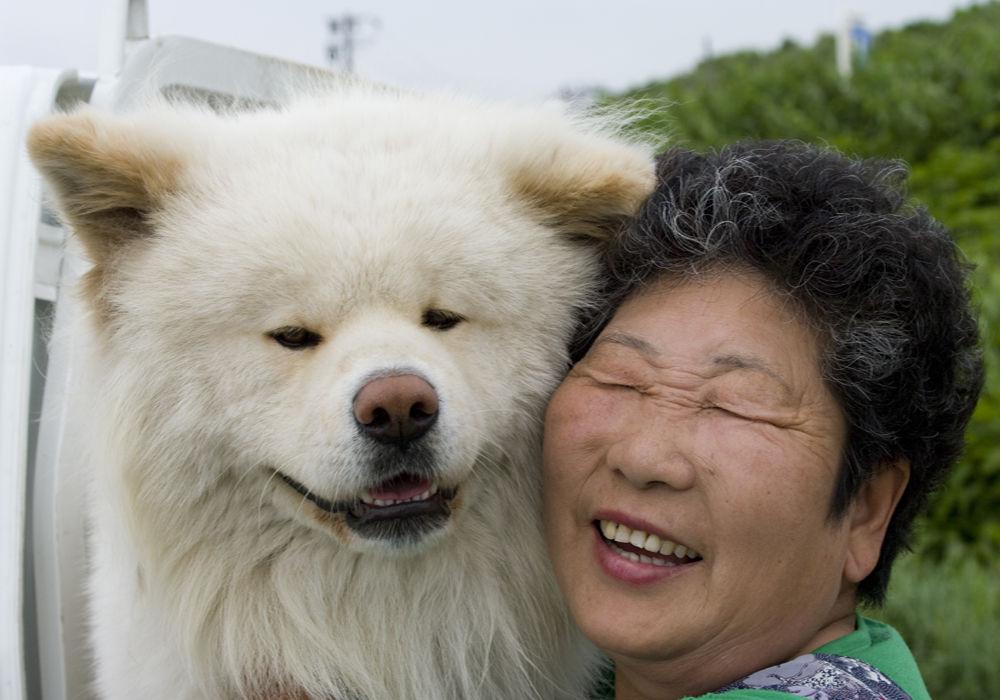 TV】犬のわさお~~っ!: 今日の...